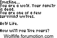 Wolf Life forum banners! WOLFBANNER8
