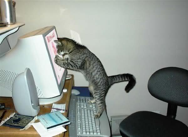 Gato no PC photo gato_pc.jpg