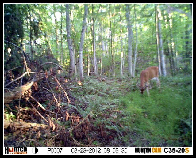 Public Land Trail Cam Pics HUNT0007