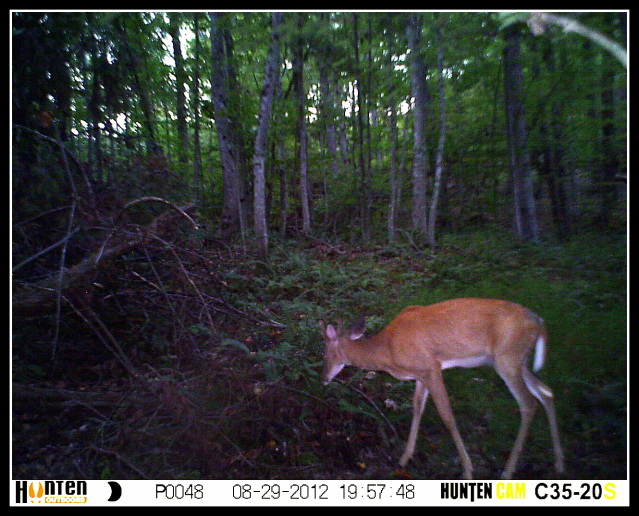 Public Land Trail Cam Pics HUNT0048