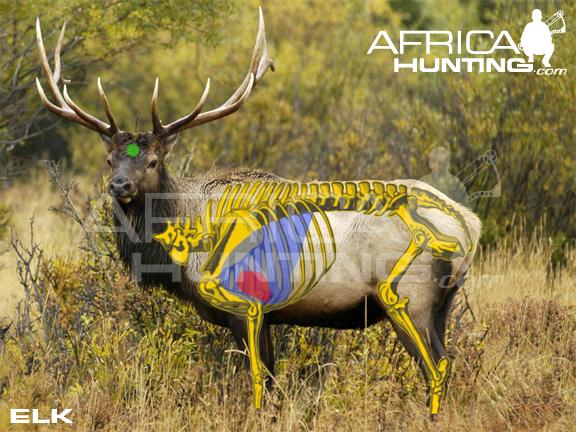 Elk Shot Placement Elk-vitals-bowhunting