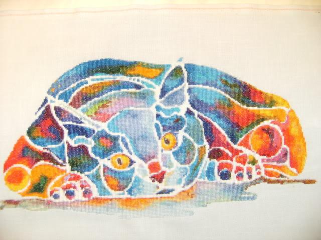 Le chat Calypso de HAED HAEDCalypso01112010004