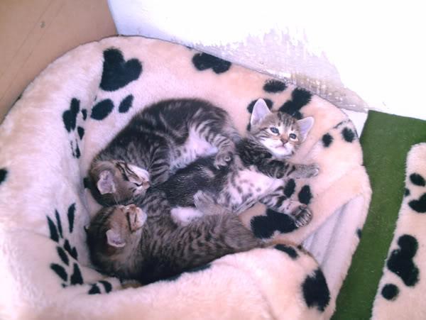 Super Kitties Superkitties