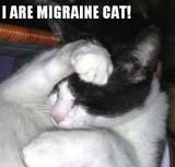 Your first subject MigraineCat