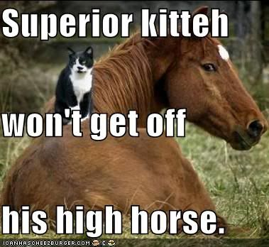 Your first subject Funny-pictures-superior-cat-on-hors