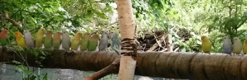 Mes oiseaux ma folie