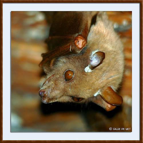 ¿Qué Animal Vivo es este? - Página 4 105141044_2dab8d6d17