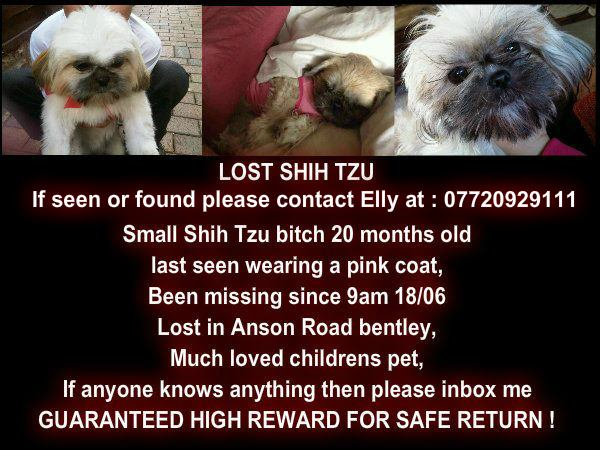 missing tzu  NOW FOUND AND SAFE 556181_10151055405866807_428647735_n