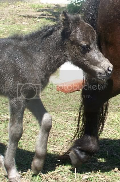 2 new foals Filly072422x640