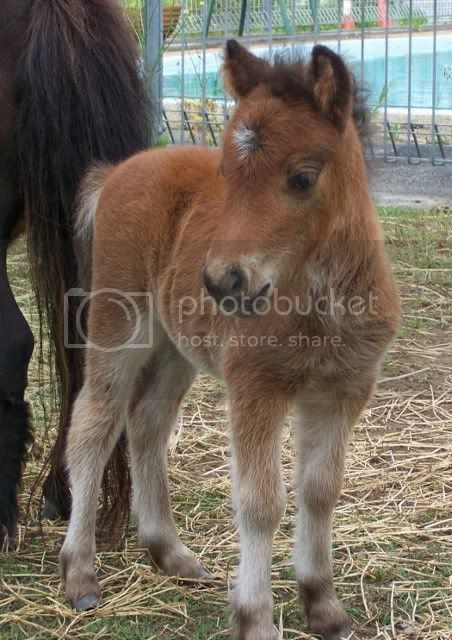 2 new foals Indy009452x640