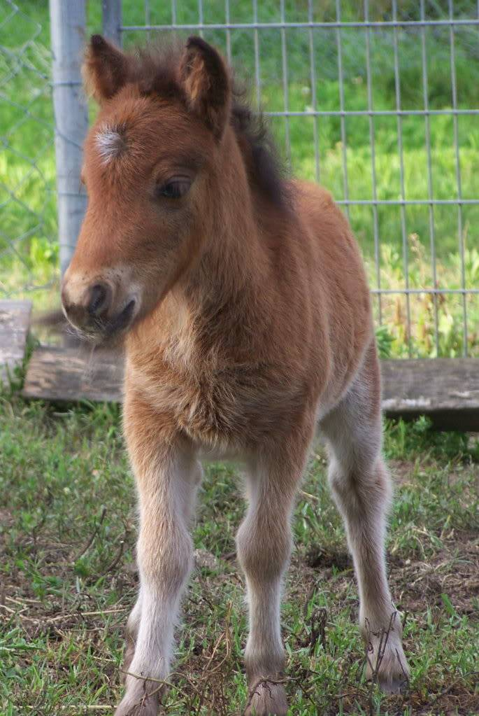 SWEET & DELICATE BAY FILLY Indy038