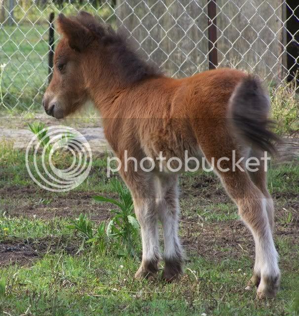 2 new foals Indy042606x640