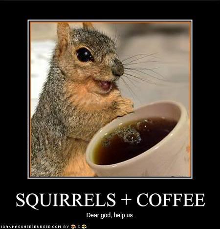 L'image drôle de la journée - Page 2 Funny-pictures-squirrels-have-disco