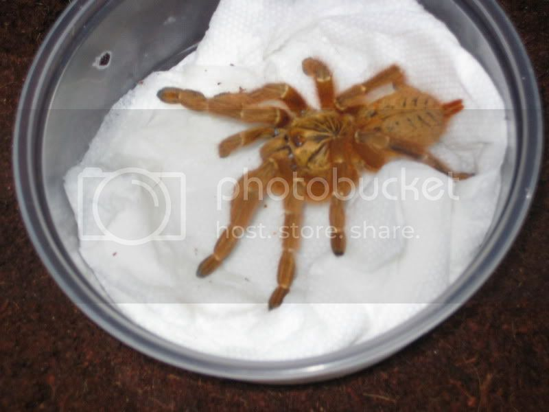 obt just came in the mail Spiders020