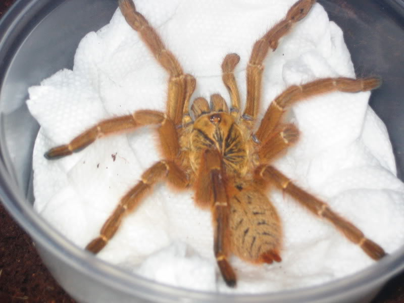 obt just came in the mail Spiders021