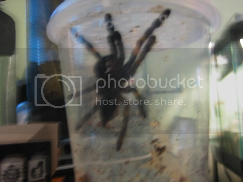 new pics of my metallica Spiders022