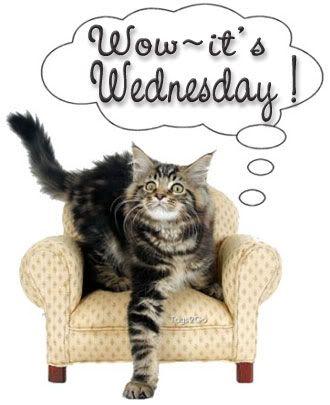 wow it's wednesday cat
