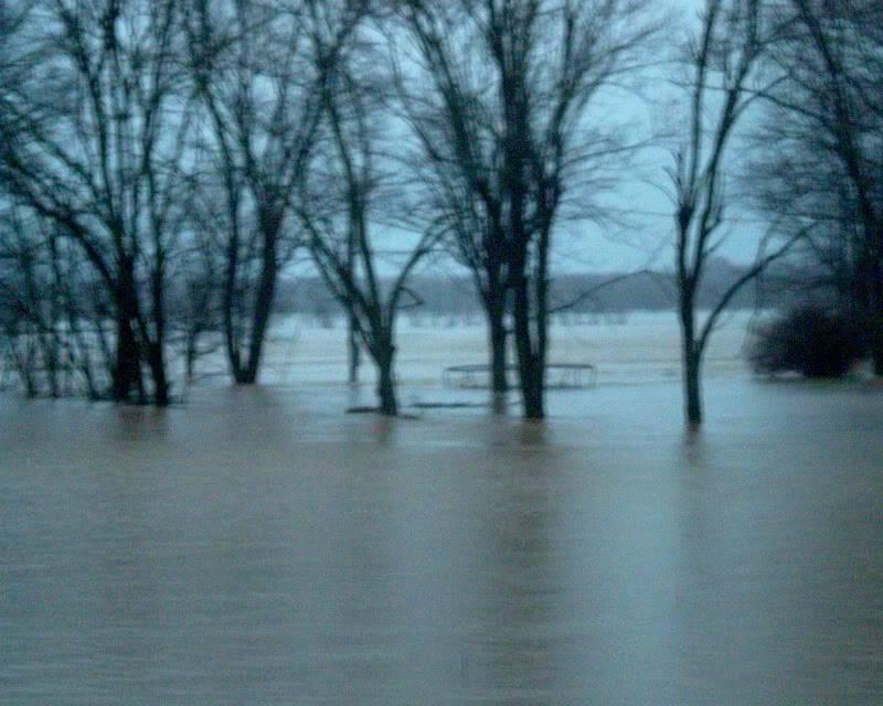 flood here in Missouri (pics) Trees