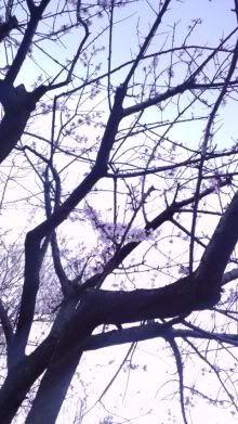 Katsumasa Inoue 5-84