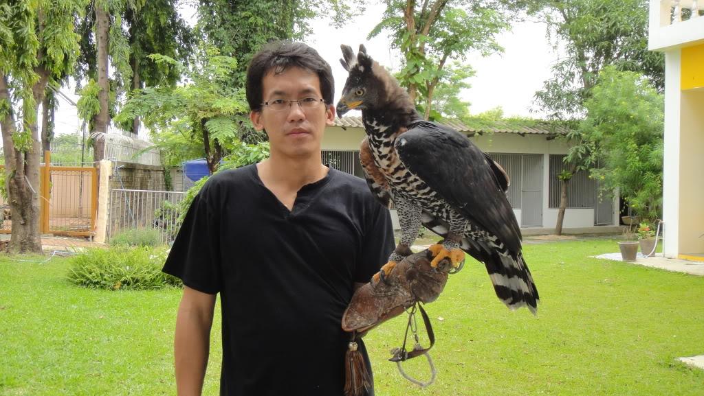 Comparação do tamanho de águias  com relação ao homem. DSC01847