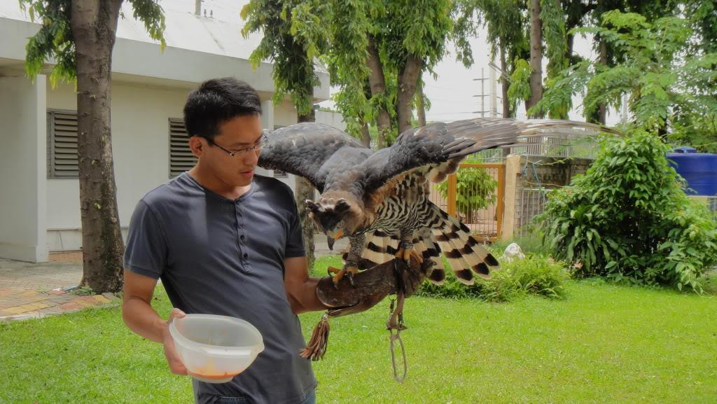Comparação do tamanho de águias  com relação ao homem. DSC01905