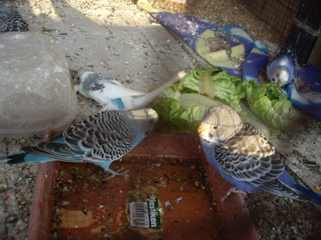 Los resultados de las nidadas. IMGP2650