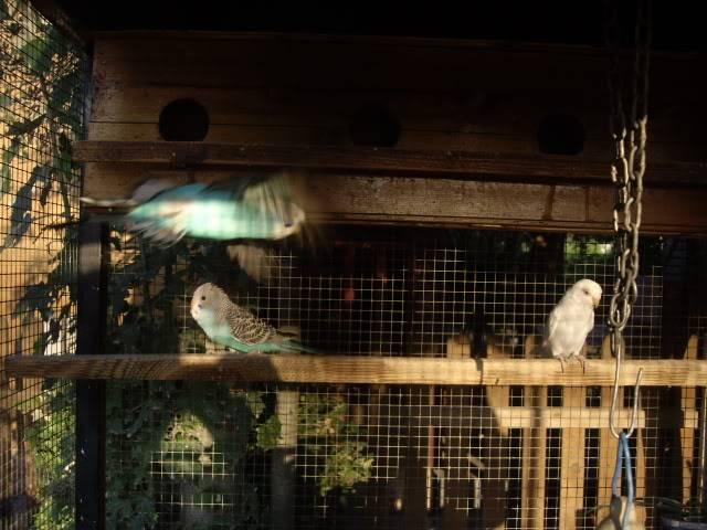 Los resultados de las nidadas. IMGP2651