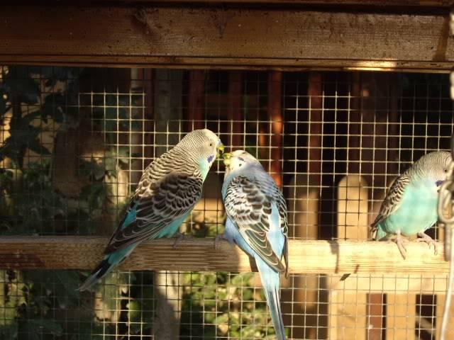 Los resultados de las nidadas. IMGP2669