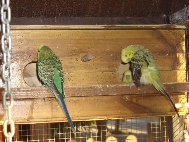 Los resultados de las nidadas. IMGP2670