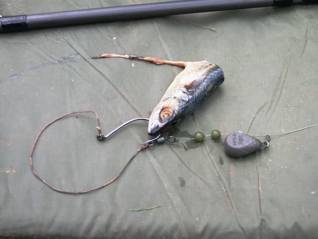 bait for catfish Cat20trip20004