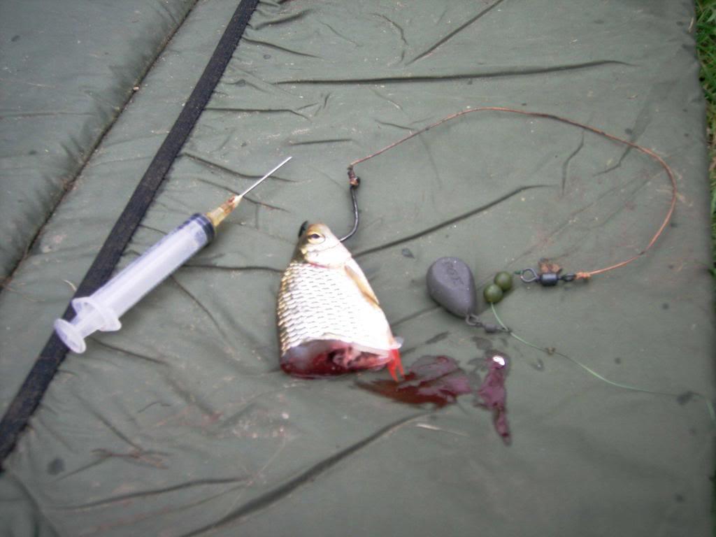 bait for catfish Cat20trip20006