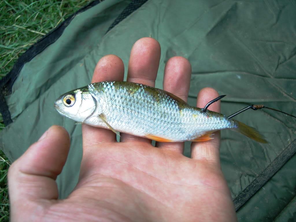 bait for catfish Cat20trip20013