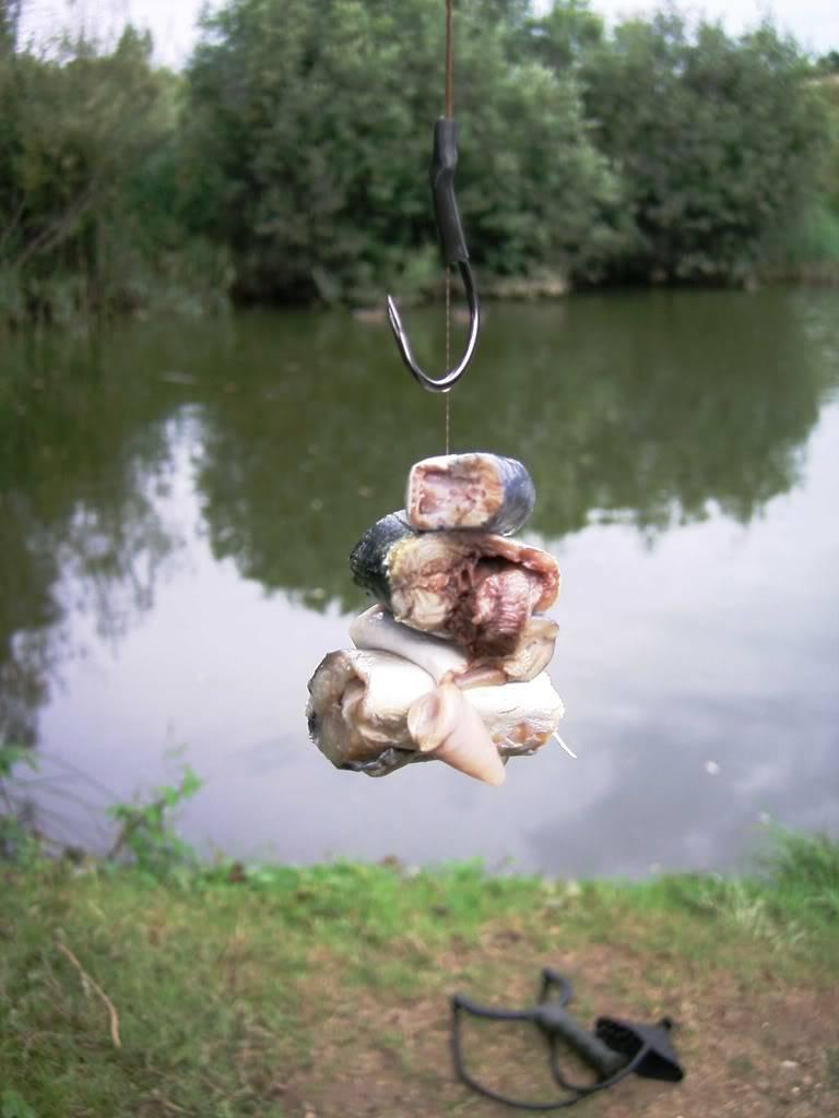 bait for catfish Fosse20hill20005