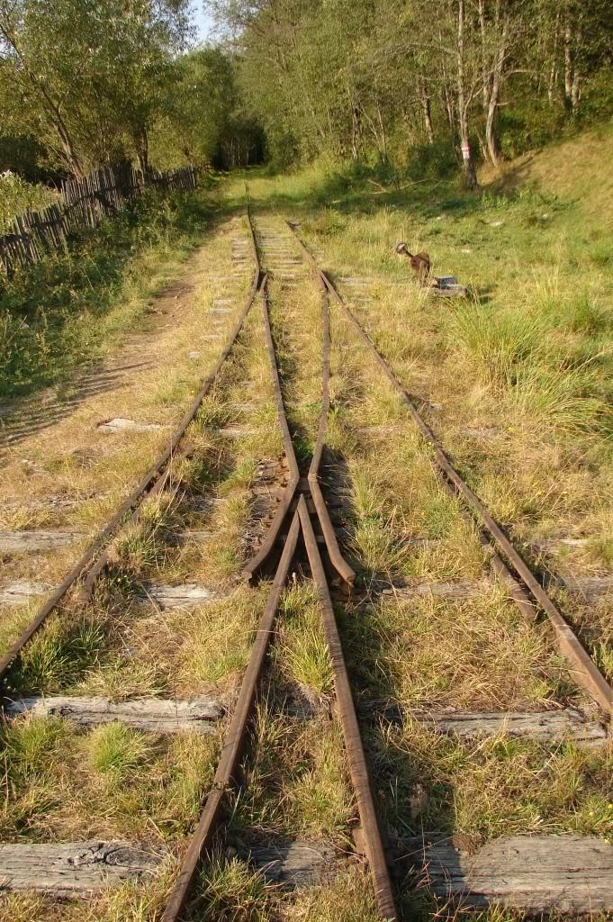 Caile ferate forestiere - Pagina 4 DSC07710