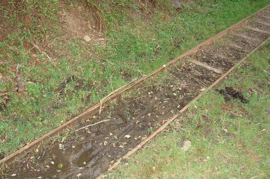 Caile ferate forestiere - Pagina 4 DSC08093