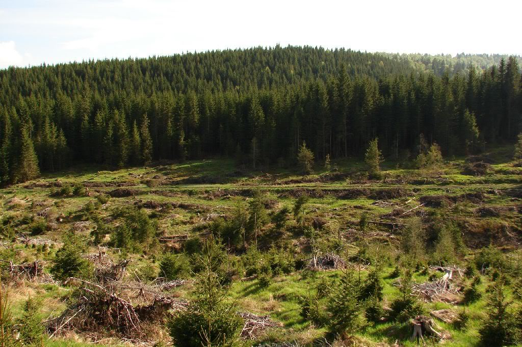 Caile ferate forestiere - Pagina 2 DSC09209
