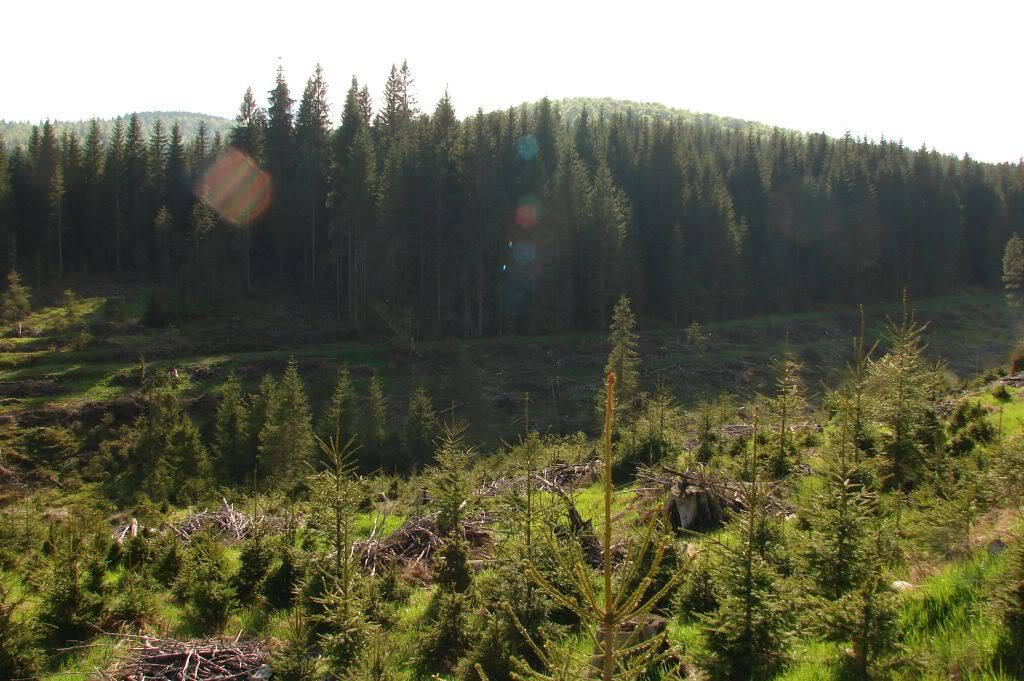 Caile ferate forestiere - Pagina 2 DSC09210