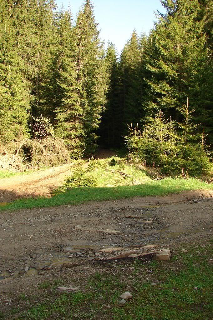 Caile ferate forestiere - Pagina 2 DSC09213