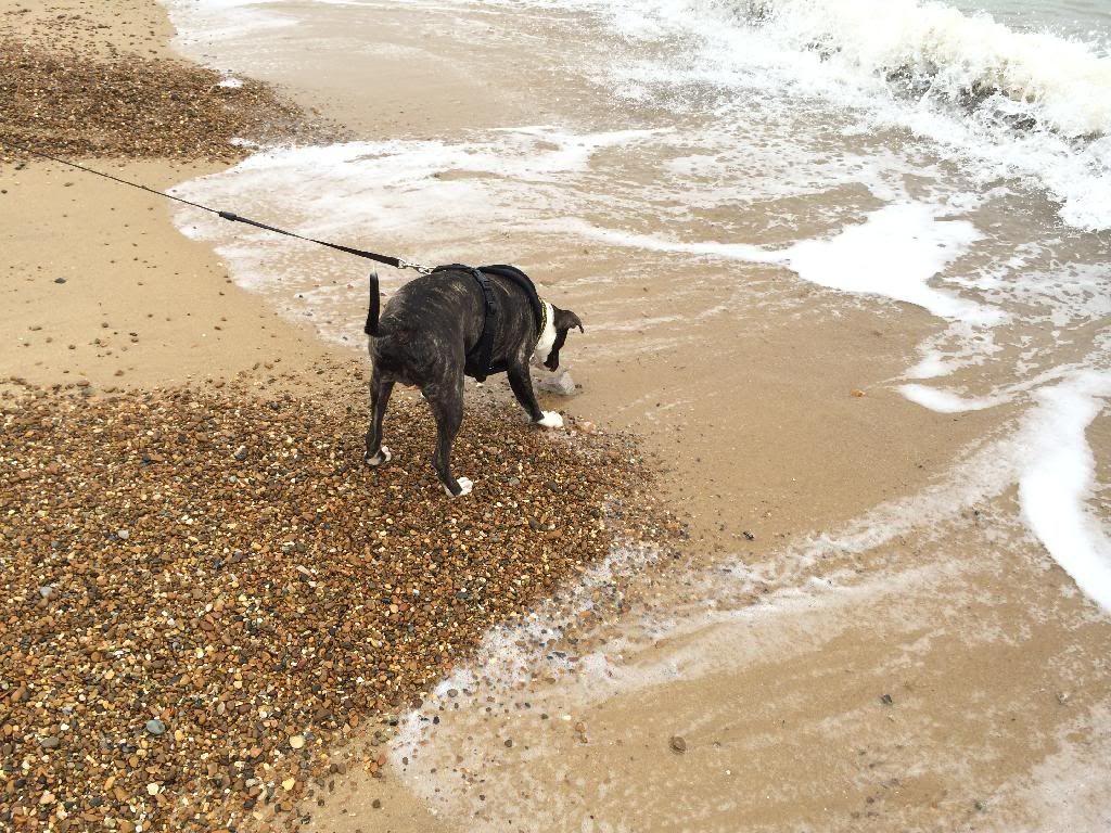 Bane's first trip to the beach! 09B1FB97-1A82-46FA-BE3C-2820667E3254_zpsatkalzyd