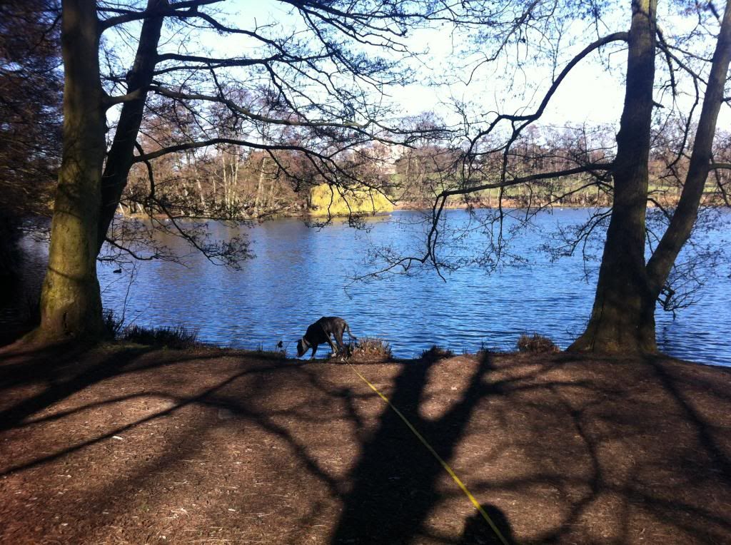 Wollaton Park IMG_3722_zpsc08a6a13