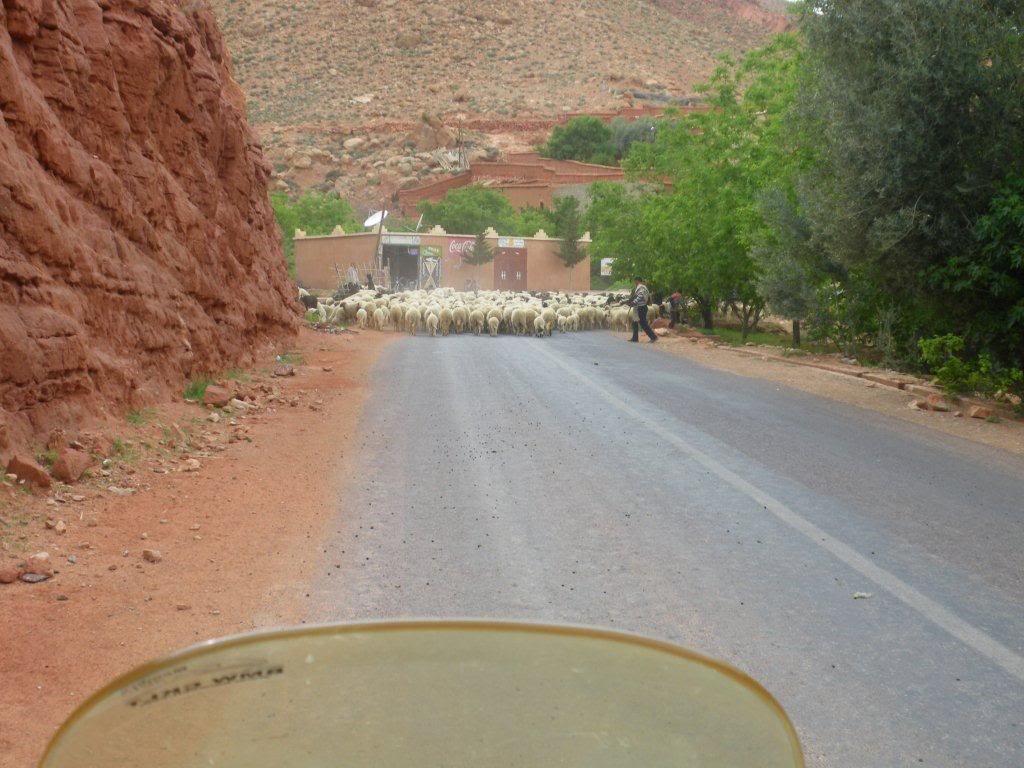 marrocos - Na Terra do Sol Poente - Viagem a solo por Marrocos - Página 2 IMGP0295
