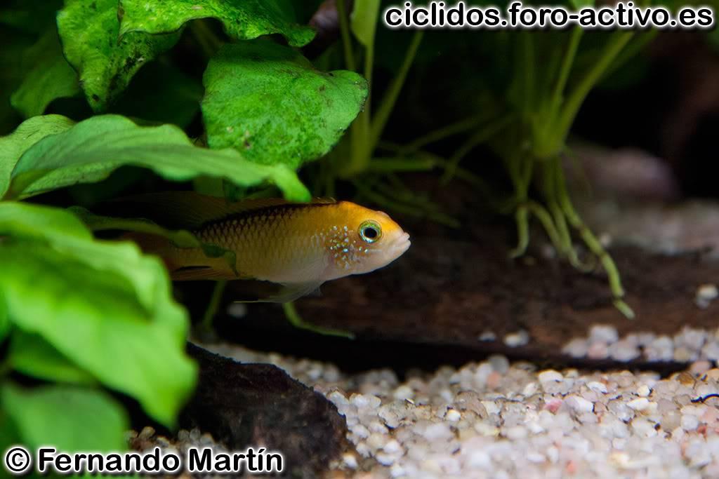 Mi 300 litros amazónico - Página 3 _MG_9888-01