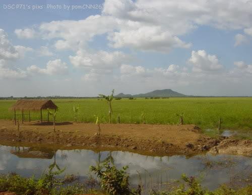 அழகான நெல் வயல்கள்2 - Page 4 Cambodia4