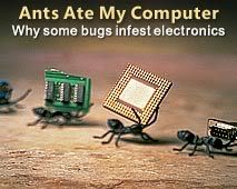 Can Ants Eat Your Computer? 21A1C7C558ABECBF14AB1AB39EB88C1