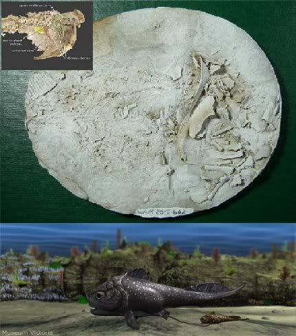 Oldest Embryo Fossil Found News