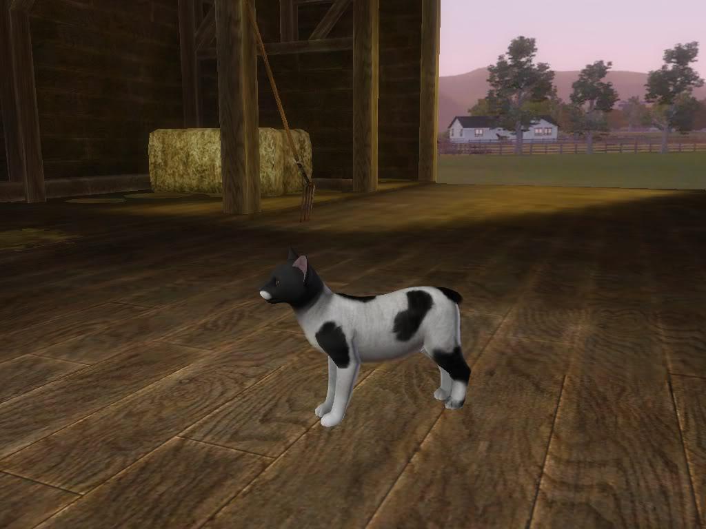 Create a Pet Demo!! Ozzie