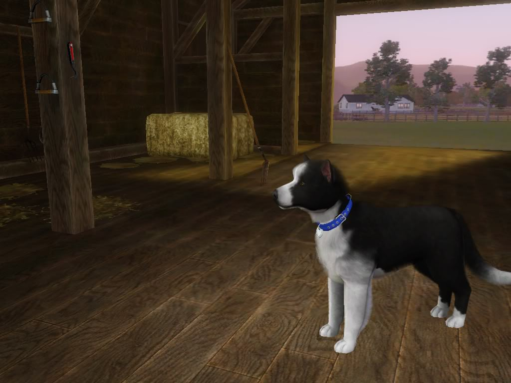 Create a Pet Demo!! RoverSideView