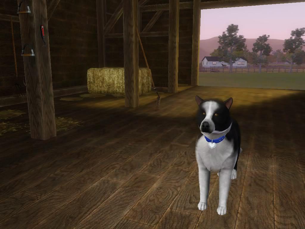 Create a Pet Demo!! Roverface