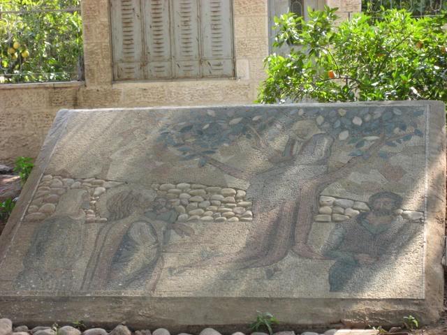 موسوعة الصور لفلسطين الحبيبة Jericho-palestinetreeofZacchaeus