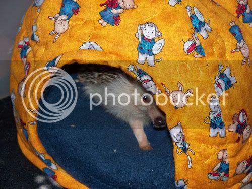 Kipic, bébé gâté !! 100_0843